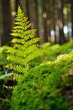 Тайна леса папоротник-орляка стоковая фотография