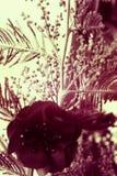 Тайна природы Стоковое фото RF