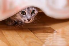 Тайники кота Стоковая Фотография RF