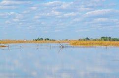 Тайники птицы центра заболоченного места Стоковое Изображение RF