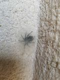 Тайник паука стоковая фотография rf