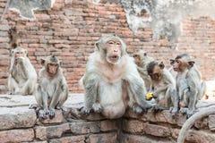 Тайская азиатская одичалая обезьяна делая различную деятельность Стоковое Изображение