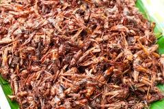 Тайская еда на рынке. Зажаренный кузнечик Стоковое Фото