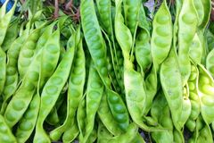 Тайская еда, язык Sato тайский vegetable Стоковое Изображение