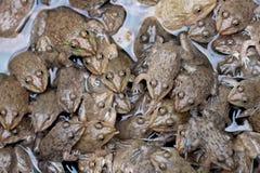 Тайская картина лягушек Стоковые Изображения RF