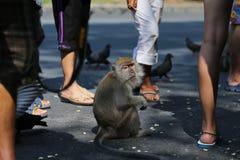 Тайская обезьяна Таиланд Стоковые Изображения RF