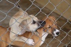Тайская собака в ждать клетки принимает к новому дому стоковые изображения rf