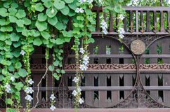 Тайская старая деревянная дверь с красивейшими листьями Стоковые Изображения