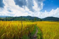 Тайская ферма Стоковая Фотография RF