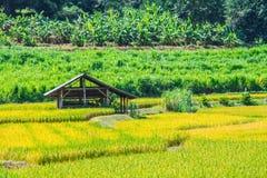 Тайская ферма Стоковая Фотография