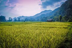 Тайская ферма Стоковые Фотографии RF
