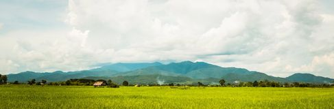 Тайская ферма Стоковое Фото