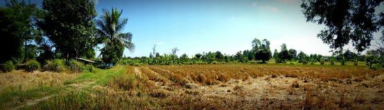 Тайская ферма стоковое изображение