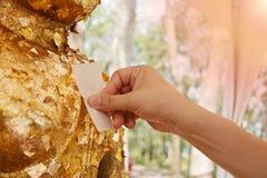 Тайские верование и чувства вероисповедания концепции стиля Азиатская мужская красивая предпосылка, около 40 лет Листы листового  стоковые изображения rf