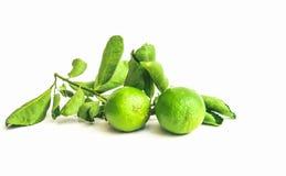 Тайские листья лимона и зеленого цвета Стоковое фото RF