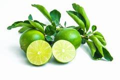 Тайские листья лимона и зеленого цвета Стоковые Изображения RF