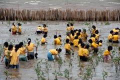 Тайские студенты вызываются добровольцем работа на деревьях мангров завода молодых стоковая фотография