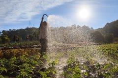 Тайские люди моча цветок в саде в Чиангмае стоковое изображение