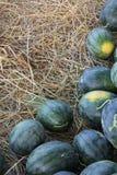 Тайский арбуз Стоковое фото RF