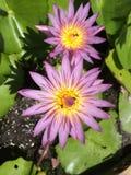 Тайский белый цветок стоковая фотография