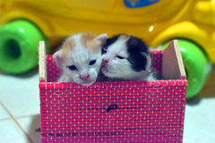 Тайский котенок красив Стоковое Фото