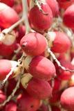 Тайский красный плодоовощ Стоковые Фотографии RF