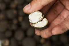 Тайский одичалый гриб Hed Thop Стоковое Фото
