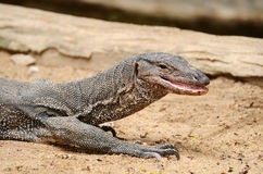 Тайский дракон в саде Стоковые Фото