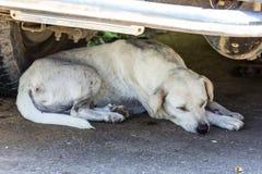 Тайский сон бездомной собаки Стоковая Фотография