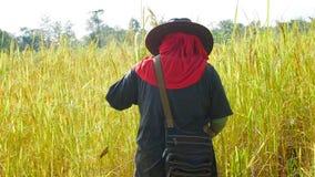 Тайский фермер работая в хранят рисе, который Стоковое Фото