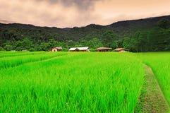 Тайский хранят рис, который стоковые изображения rf