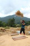 Тайский хуторянин молотит зерна Стоковое Изображение RF