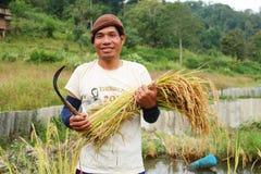 Тайский хуторянин человека в поле неочищенных рисов Стоковая Фотография RF