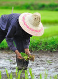 Тайский хуторянин Стоковые Фото