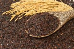 Тайский черный рис жасмина (ягода риса) Стоковые Изображения RF