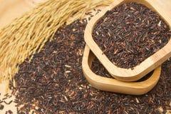 Тайский черный рис жасмина (ягода риса) Стоковая Фотография RF