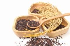 Тайский черный рис жасмина (ягода риса) Стоковая Фотография