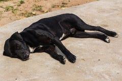 Тайский черный сон бездомной собаки Стоковые Фото