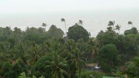 Тайфун Pabuk, берег моря океана, Таиланд Стихийное бедствие, ураган eyewall Сильный весьма ветер циклона пошатывает ладонь акции видеоматериалы