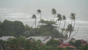 Тайфун Pabuk, берег моря океана, Таиланд Стихийное бедствие, ураган eyewall Сильный весьма ветер циклона пошатывает ладонь видеоматериал