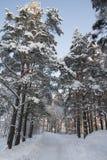 Такая красивая сказка зимы стоковые изображения
