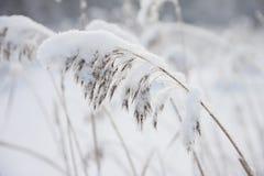 Такая красивая сказка зимы стоковые фото