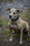 Такая хорошая собака, Стоковая Фотография RF