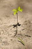 также больш вырастите I одно к поднимающей вверх воле Стоковое Фото