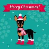также вектор иллюстрации притяжки corel Чихуахуа в ботинках, шляпе и шарфе на предпосылке снежинок Изображение рождества для укра Стоковое Изображение