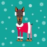 также вектор иллюстрации притяжки corel Doberman в пальто и брюках на предпосылке снежинок Изображение рождества для украшения го Стоковая Фотография
