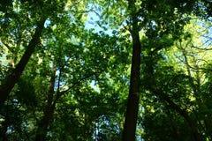 Также, смешивание лесов в реальном маштабе времени, зеленых и голубого неба! Стоковые Изображения