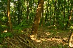Также, смешивание лесов в реальном маштабе времени, зеленых и голубого неба! Стоковые Фотографии RF
