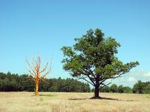 2 таких различных деревья, апельсин и зеленого цвета Стоковое Фото