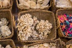 Такой же тип собранных раковин моря Стоковые Фотографии RF